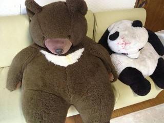 クマとパンダ
